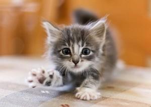 micio-spaventato